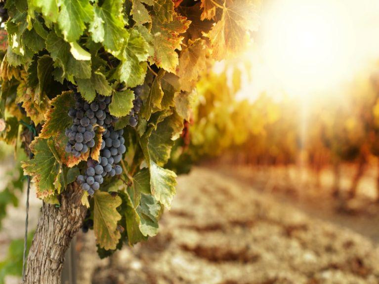 Produzione frutta Napoli